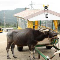 アトラクションレベルの船に乗って西表島へ 水牛車に乗って由布島へ < GW明けの八重山諸島旅 2日目その2 >