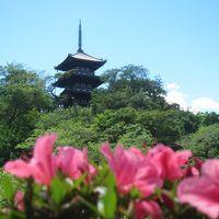横浜の三渓園へ行く。