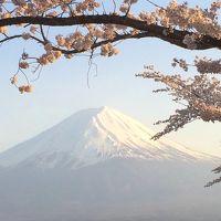 ボクを富士山に連れてって