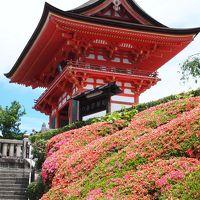 2018京都 〜学業成就、必勝祈願の神様巡り(1)通勤ラッシュですかここは
