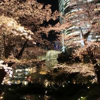 仕事帰り六本木でお花見散歩(2018年3月)