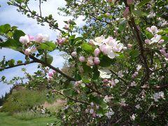 リンゴの花の咲くプリンスエドワード島へ その1(羽田〜シャーロットタウン)
