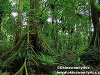 トレッキング・カヤック・シュノーケルの旅(コスラエ島)
