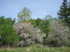 リンゴの花の咲くプリンスエドワード島へ その4(レンタカーでオーウェルコーナーその他)