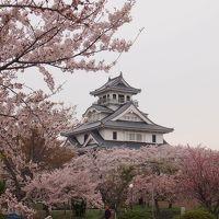 青春18きっぷの旅 2018年春 [6] 長浜の桜はまだ見頃が続いていました