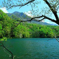 新緑に癒された5月の東北旅行(1)緑がまぶしい十二湖ハイキング