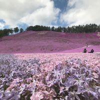 春の北海道で釧路湿原と東藻琴芝桜公園