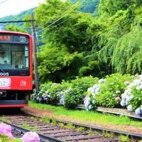箱根登山電車で行こう!うれし☆はずかし初めての箱根には「あじさい」と「見どころ」がたくさんありました〜♪
