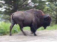初老夫婦のアメリカ中西部国立公園巡り4200Kmドライブ旅行(第6日目)