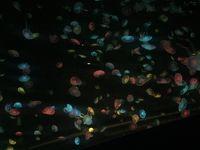 マカオと珠海(水族館)の旅