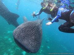 セブ島・ボホール島を満喫する3泊4日の旅