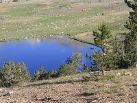 ヨセミテ国立公園のゲイラーレイクと新マリポサグローブ
