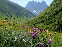 団塊夫婦5回目の世界一周絶景の旅—ジョージア編(2)ジョージアのドロミテ・お花畑が広がるジュタへ