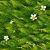 2018 夏の涼しさを求めて・治左川(福井)と地蔵川(滋賀)との梅花藻の写真