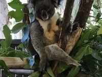 グレートバリアリーフに浮かぶ楽園ハミルトン島とシドニーを巡るオーストラリアの旅� コアラと記念撮影