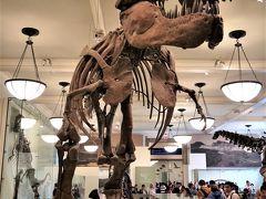 2018年夏季休暇 ニューヨーク �アメリカ自然史博物館、メトロポリタン美術館、ロックフェラー・センター