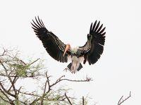 野鳥の楽園♡ ケオラディオ国立公園