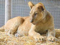 うへっ!!ここ本当にヤバイ!...げに恐ろしいブエノスアイレスの【ルハン動物園 Zoo Lujan】#2(ブエノスアイレス郊外/アルゼンチン)