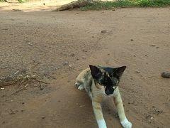 カンボジア シェムリアップ  2泊4日ツアー