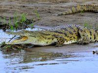 タンザニアでサファリ三昧  1セルー動物保護区のリバーサファリ タンザニアへ、キャンプ到着後すぐサファリ
