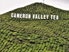 マレー半島陸路で縦断の旅 その� キャメロンハイランドの紅茶畑へ