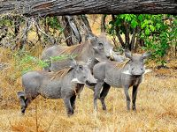 タンザニアでサファリ三昧  2セルー動物保護区のサファリ