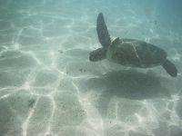 子連れハワイ旅行 2018 4歳男の子 4日目 ハナウマ湾