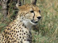 ケニア・マサイマラとナイロビでサファリ三昧の一人旅 その2 マサイマラ編1〜2日目
