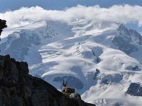 花とスイス(5)ツェルマット周辺 <晴れ時々曇り> 花とアルプスの景色に感動のリッフェル湖とシュテリ湖のハイキング・ゴルナ−グラ−ト展望台・スネガ展望台からライ湖へ