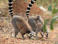 マダガスカルゆったり周遊12日間のツアーに参加 行ってきました! �3 アンタナナリボ観光編(世界遺産アンボヒマンガ〜レミュールパーク)