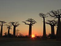 マダガスカルゆったり周遊12日間のツアーに参加 行ってきました! �4 モロンダバ観光編(バオバブの並木道〜愛し合うバオバブ〜双子のバオバブ等)