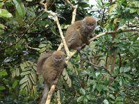 マダガスカルゆったり周遊12日間のツアーに参加 行ってきました! �5 アンダシベ観光編(レミュールアイランド〜ミツィンジュ保護区)