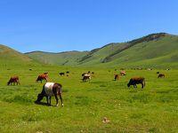 モンゴル旅その6 草原の新しい朝!青い空、緑の草原、牛、牛、ときどきヤク