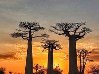 マダガスカルで美味しい食事と原風景、ゆったりと流れる時間を堪能