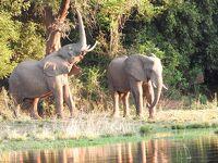 象の楽園、ロウワーザンベジ国立公園,2018/9(前半)Baines River Camp編