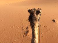 2018年春 モロッコ旅行 ラクダの背中でゆ〜らゆら