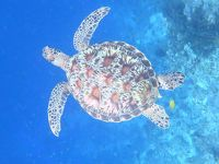 珊瑚の海は絶対肌にいいんだってばパングラオの旅�