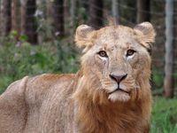 【2018海外】アフリカ周遊&ちょこっとアジア #13 ~ケニア 行き当たりばったりでナイロビ国立公園へ~
