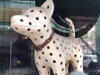 Spotty Dog welcomes You?