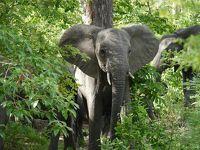 女一人旅 再びアフリカサファリ、タンザニアのセルースへ。