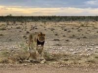 ナミブ砂漠とサファリ(エトゥーシャ)