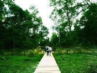 カンボジア女一人旅�池の上を歩く!