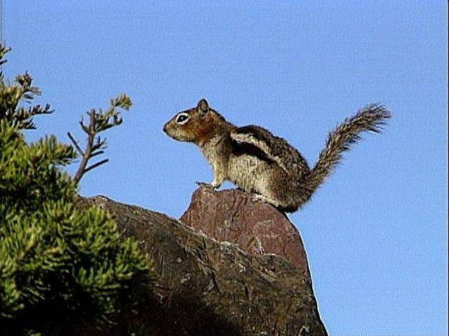 グレイシャー国立公園の画像 p1_17