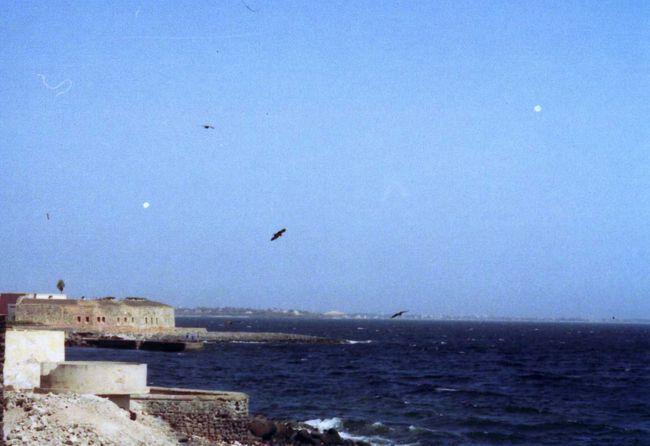 ゴレ島の画像 p1_35