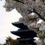 JR東海から出ている京の遊々きっぷは京都までの新幹線「のぞみ」「ひかり」「こだま」普通車指定席での往復と「京都観光一日乗車券」をセットにしたきっぷ 。
