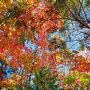 こんな色とりどり鮮やかな紅葉の中での山登りでした。