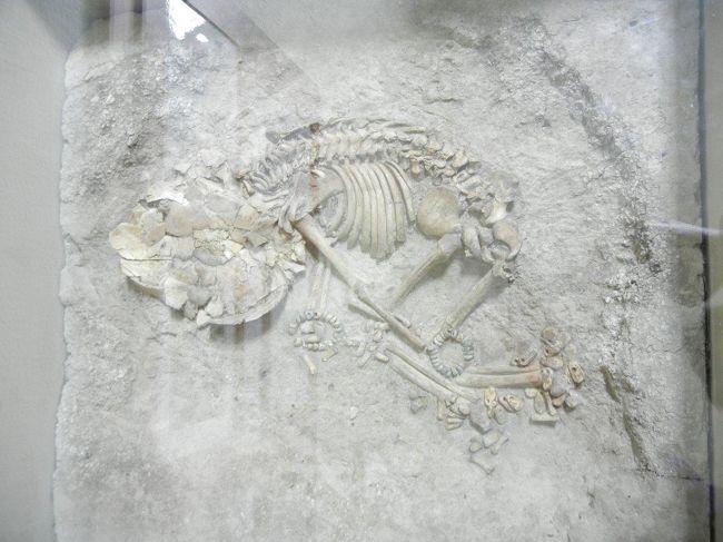 チャタル・ヒュユクの画像 p1_30