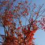 ケーブルカーで頂上?へ。秋も深まり紅葉がとても綺麗でしたー!