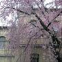 旧京都府庁舎  H25.4.6