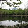 知床の森のガイドゆらりさんに一日ツアーガイドをお願いしました。 まずは知床の原生林の中を歩いていくと・・・